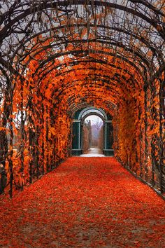 landscape photography - favorite-season: Autumn in Vienna by Kate...