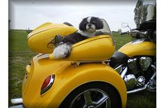 Motorcycle Trike Pet Carrier  Every dog loves riding in a car while sticking his head out the window. Give your pooch the ultimate driving experience with this motorcycle trike pet carrier. While it's designed specifically for trikes (three-wheel motorcycles), it can also be used with regular motorcycles, scooters and golf carts. Made from fiberglass, it's both strong and lightweight and can also be custom painted to match your bike. At only $750, it's a drop in the bucket compared to the…