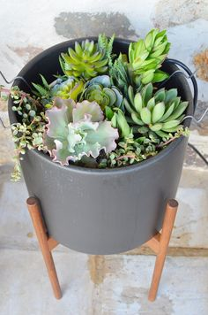 How to Plant Succulents Photo by Amy Renea of A Nest for All Seasons \ Modernica Case Study Ceramic Cylinder with Wood Stand