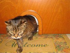 Cat Door Arch