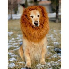 Realistic Lion Mane Costume for Dogs