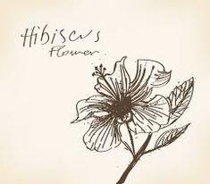 「flor de hibisco desenhos」的圖片搜尋結果