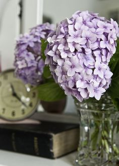 I know that no matter what colors I choose, I will be able to find Hydrangea to fit right in.