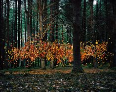 Floating leaves in a forest. Part of a series of floating-object art by Thomas Jackson.