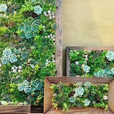 Vertical Succulent Garden Google Search Gardens Wall Diy