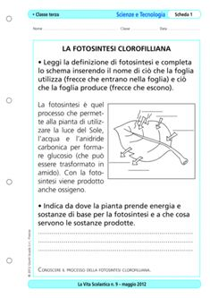 Schede Didattiche Sulla Fotosintesi Clorofilliana Per Bambini