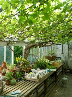 The experts at HGTV.com share tips on lighting your greenhouse properly.