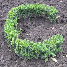 """""""Reminds me of my Grandma Elsie - she would write my name in the dirt and plant cress.  We would water it each day and see my name grow.  Sweet memories of my Grandma in an English garden."""""""