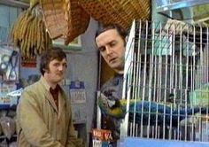 Monty Python-Dead parrot-funniest comedy sketch ever.