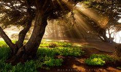 california forest | ... , forest, trunks, trees, sun, light, landscape, california photo