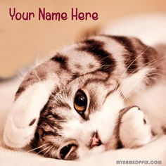 Write Name On Beautiful Cat Cute Profile Image. Online Print Lover Name Cute DP. Create GF or BF Name Cutest Cat Awesome Profile Pics. Cute Pictures With Name Profile. His or Her Name Writing Latest Cute DP. Best Cute Cat Amazing Set Profile. Free Name Cute Cat Photo Editing. Awesome Cute Cat With My Name Pix. Your Name Nice Looking Cute Cat DP. Whatsapp And Facebook On Set Cute Profile. Download Anyone Name cute Wallpapers.