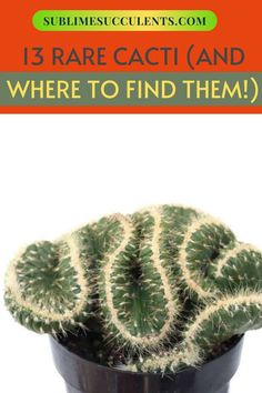 We've gathered a list of some rare cacti and where to find them. Obtaining some of these hard-to-find succulents and cacti is a good start, but some are hard to care for! To know more about these rare cacti, check out this pin! #succulents #raresucculents #indoorgardening #outdoorgardening #gardeningtips #cacti Flowering Succulents, Cacti And Succulents, Cactus Plants, Cactus Games, Succulent Care, Types Of Plants, Amazing Gardens, Gardening Tips, Outdoor Gardens