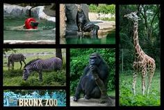 bronx zoo - Google Search