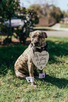 Timeless elegant Greek wedding in California - Chic & Stylish Weddings Wedding Outfits For Family Members, Dog Wedding Outfits, Wedding Suits, Wedding Attire, Greek Wedding, Our Wedding, Dogs In Wedding, Wedding Blog, Baby Animals