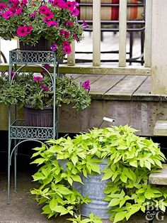 This collection of container annuals will look beautiful even if you forget to water them.