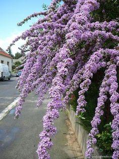 Garden Inspiration, Flowers, Plants, Gardening, Beautiful Landscapes, Garten, Flora, Plant, Bloemen