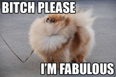 "I am obsessed with the meme ""Bitch, Please! I'm Fabulous."""