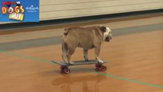Here's me skating at a high school featured on the Feb 1st episode of Who Let the Dogs Out on Hallmark Channel. Set Your DVR!