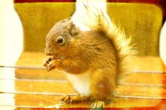 I took this picture of a squirrel outside our lodge in the morning on the table, i then edited it in befunky