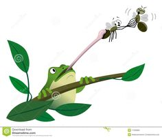 Frog Catching Fly With Tongue Royalty Free Stock Photo - Image ...