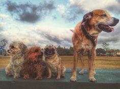 Maddox Dog Park - San Diego, CA - Angus Off-Leash #dogs #puppies #cutedogs #dogparks #sandiego #california #angusoffleash