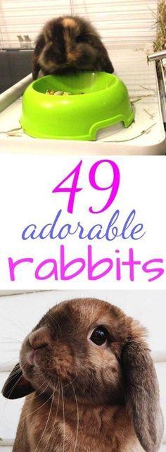 49 aborable bunny photos
