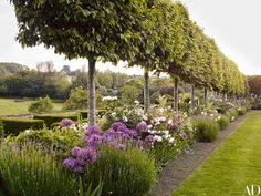 Trained hornbeams are underplanted with roses, alliums, and lavender at Temple Guiting Manor, a medieval Cotswold estate turned hotel | archdigest.com