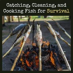Learn the basics of cooking, cleaning, and cooking fish in a survival situation. Catching Cleaning Cooking Fish for Survival   Backdoor Survival #survivalcooking