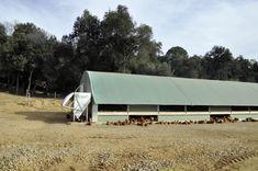 Selecciones Avícolas - Diversificación ecológica Cabin, House Styles, Outdoor Decor, Home Decor, Types Of Chickens, Homemade Home Decor, Cabins, Cottage