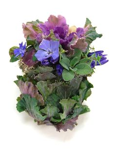 Shape wet OASIS Floral Foam into an egg form. Cover with leaves of kale. Add delicate flower buds.