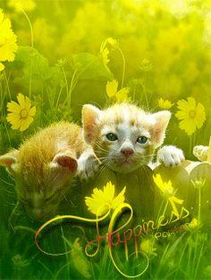 GIFS HERMOSOS: FLRES Y MARIPOSAS ENCONTRADAS EN LA WEB Beautiful Butterflies, Beautiful Flowers, Gifs, Whimsical, Butterfly, Animation, Aloe, Glitter, Animals
