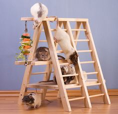 What a great rat playground accessory ! Looks like fun for all and when they get bored....instant chew toy !