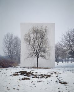 TREE series by South Korean photographer, Myoung Ho Lee