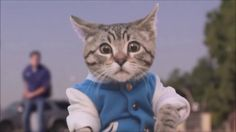 Aaron's Hayvanlar Komik Kediler Yeni Video 2017 Komik Vine