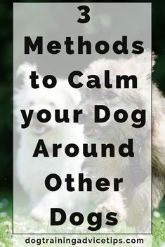 Dog Training Tricks 3 Methods to Calm Your Dog Around Other Dogs. Training Tricks 3 Methods to Calm Your Dog Around Other Dogs. Therapy Dog Training, Best Dog Training, Therapy Dogs, Training Classes, Leash Training, Toilet Training, Crate Training, Puppies Tips, Dogs And Puppies