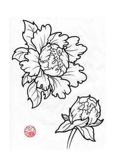 Open & Closed Peony Sketch                                                                                                                                                                                 More