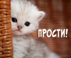 Humor, Cats, Animals, Gatos, Animales, Humour, Animaux, Moon Moon, Funny Humor