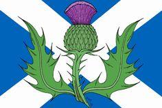 Le chardon écossais