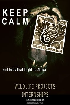 Personal contact with all projects and you during your stay! South Africa, Safari, Wildlife, Projects, Travel, Blue Prints, Viajes, Destinations, Traveling
