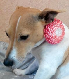 Dog collar flowerDog collarPink White dog collar by AirinFlowers #DogAcccessory #PetAccessory #DogClothes #kanzashi #PetSupplies #CollarFlower