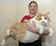 gros chat