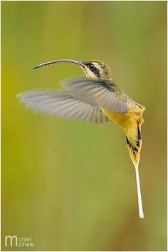 Costa Rica | Flickr - Photo Sharing!