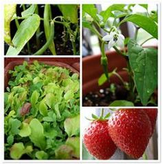 Gardening in Small Spaces. Vegetable Gardens for Apartments!