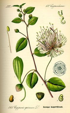 List of Indian spices - Wikipedia, the free encyclopedia More