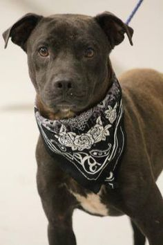 ADOPTED> NAME:Art ANIMAL ID: 33029794 BREED:terrier mix SEX: male- neutered EST. AGE:2yr Est Weight:40lbs Health:heartworm neg Temperament:dog friendly, people friendly ADDITIONAL INFO: RESCUE PULL FEE:$35 Intake date:2/2 Available:now