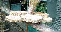 Another cedar platform without a cover to offer more feeding stations in enclosures. Zoo Animals, Animals And Pets, Bird Feeding Station, Zoo Keeper, Wild Dogs, When I Grow Up, Catio, Cool Pets, Primates