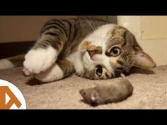 Cat & Mouse Playing Together • COMPILATION