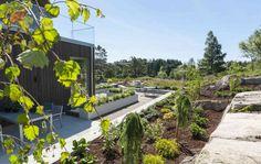 VARIASJON: Mange ulike grønne planter har fått plass i hagen. Foto: Pandora Film