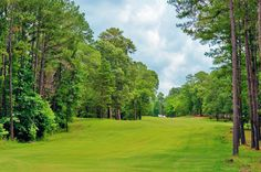 Beautiful wooded area on the land at Purley Gates Ranch - 131 Purley Gates, Winnsboro, Texas