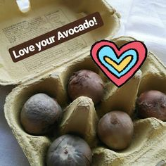 #the100dayproject Always keep the Avocado happy to get best dye results!😋